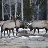 Elk Sparing