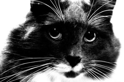 Cheeks...the family cat