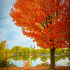 Travel_Photography_Blog_Canda_Montreal_Burning_Tree