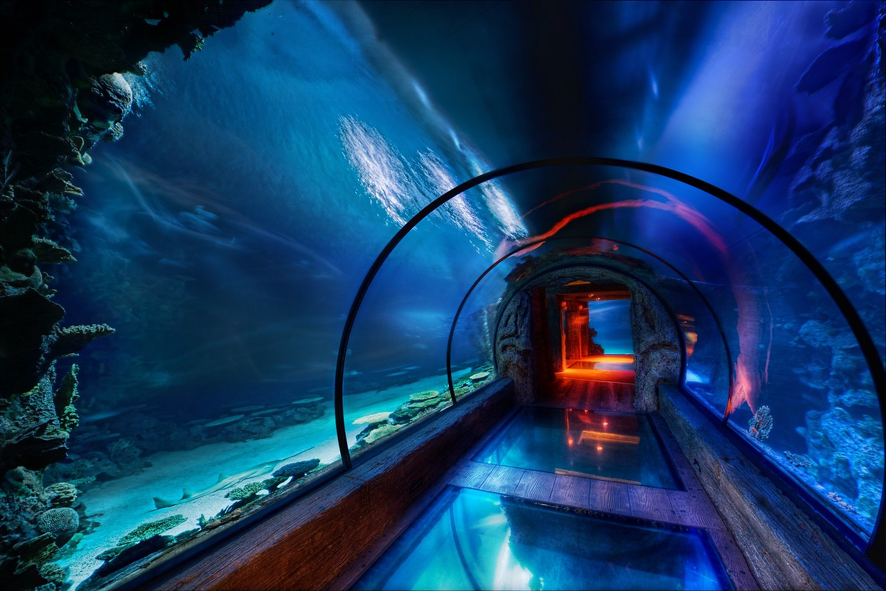 The Secret Underwater Passage This was shot under the Mandalay Bay hotel in Las Vegas where they have this lavish aquarium.  It's really gorgeous and dreamy under there, as you can tell.  This area has all kinds of sharks and other wild-lookin' things that were swimming all around me.  I was fortunate enough to take a private tour of the place thanks to the nice people at the MGM/Mirage management company, who also owns the Mandalay Bay.  That allowed me to take the time I needed to set up this 5-exposure HDR shot without tourists getting in the way.One time I did find a nurse shark in the Caribbean.  It was a baby.  I followed it for a while until it occurred to me that it might be swimming back to its mom.  That sudden realization made me turn around pretty quick.All of this underwater stuff reminds me of watching those Discovery channel shows about strange ocean creatures.  I swear I could watch those things all day.  I can't get over how some of these things have evolved to fit their environment... just amazing.  My favorite creatures are cephalopods ... I never get tired of those documentaries!- Trey RatcliffClick here to read the rest of this post at the Stuck in Customs blog.