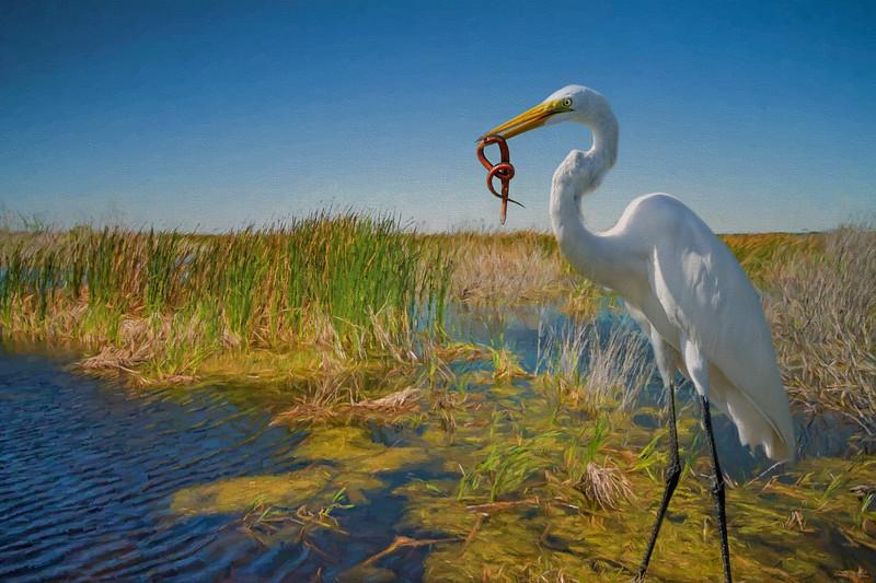 Great Egret witn snake
