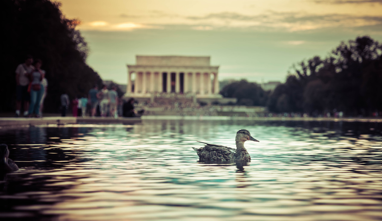 A Duck At The Lincoln Memorial