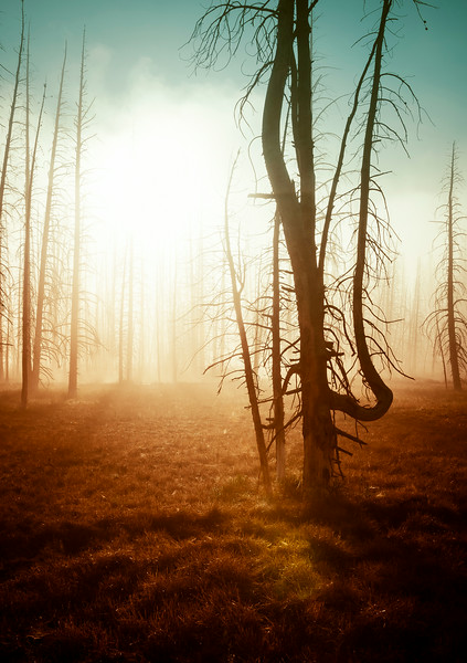 The Foggy Mists of Yellowstone