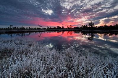 Flozen bog
