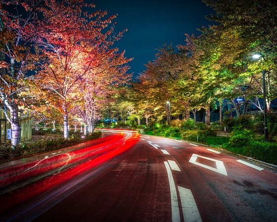 Autumn Colors At Night In Tokyo
