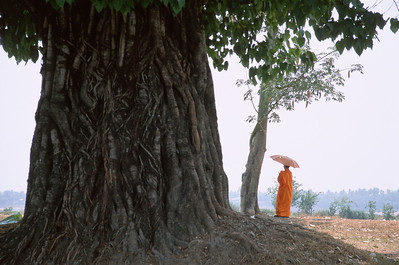 Monk With Banyan Tree, Vientiane Laos
