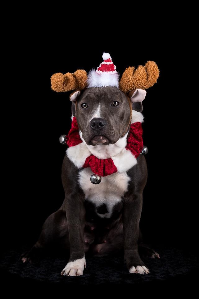 Xena Christmas Low Key -  - Sunday, Dec. 11, 2016