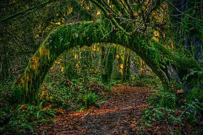 'Olympic Gateway' ~ Hoh Rainforest, WA