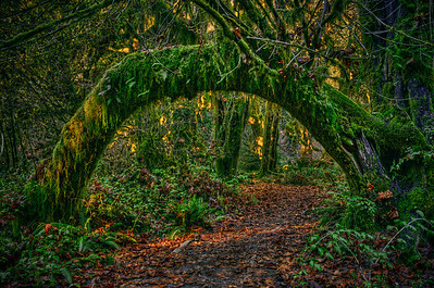 'Olympic Gateway' ~ Hoh Rainforest, WA