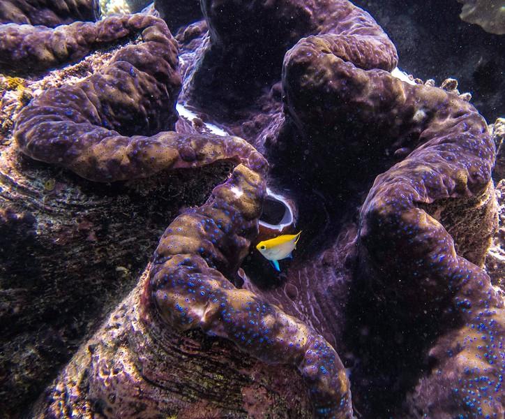 Clam Taken