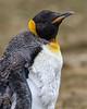Falklands-