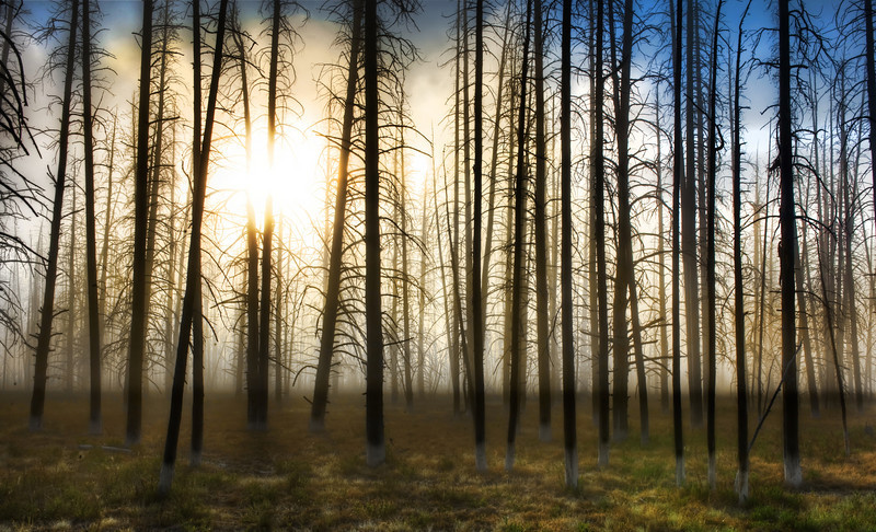 "<h2>The Skeletons at Sunrise</h2> <br/>At one point when driving through Yellowstone a few weeks ago, I got out of the car and started walking right into the forest on the edge of the road.  There was a thick fog and the morning sun was low, creating an unexpected box of light.  I kept walking and walking until I found this area.  It just felt right for whatever reason, so I set up to take this HDR.<br/><br/>In other news, I found out today the exact meeting location for our upcoming <a rel=""nofollow"" href=""http://www.facebook.com/treyratcliff#/event.php?eid=234399810146&ref=ts"">PhotoWalk at Sunset here in Austin</a>.  We will be meeting in the <a rel=""nofollow"" href=""http://www.driskillhotel.com/victorian-social-room.php"">Victorian Room inside the Driskill Hotel</a> on 6th street to gather before the walk.  It's nice and air-conditioned in there, so we can save all the fun summer Texas sweatbox for the walk itself!  Feel free to gather there between 7 and 7:30 PM on Thursday evening, August 6th.  Once we're all gathered, I'll set the groundrules and then we'll be off!  By the way, a few people have asked if they can bring their kids, and that should be just fine... no problemo.<br/><br/>- Trey Ratcliff<br/><br/><a href=""http://www.stuckincustoms.com/2009/08/01/the-skeletons-at-sunrise/"" rel=""nofollow"">Click here to read the rest of this post at the Stuck in Customs blog.</a>"