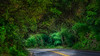 Cameron_Park_Road