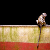 "<h2>Across the Line</h2> <br/>I found this guy in the Batu Caves just outside of Kuala Lumpur, Malaysia. The Batu Caves are enormous caverns that hold various Hindu temples and plenty of fruit for monkeys. This was shot after a quarter-mile spelunk through the cave and an emergence into a geological oddity – a shaft of sunlight shining downwards through an open chamber that had been carved through the limestone after centuries of rainfall.<br/><br/>The day was bright and sunny, and the monkey sat alone in front of the inky blackness of the cave entrance. This was shot as a single RAW photo. It only had minor HDR adjustments, to get the texture in the wall and the details in his fur.<br/><br/>- Trey Ratcliff<br/><br/><a href=""http://www.stuckincustoms.com/2006/10/24/across-the-line/"" rel=""nofollow"">Click here to read the rest of this post at the Stuck in Customs blog.</a>"