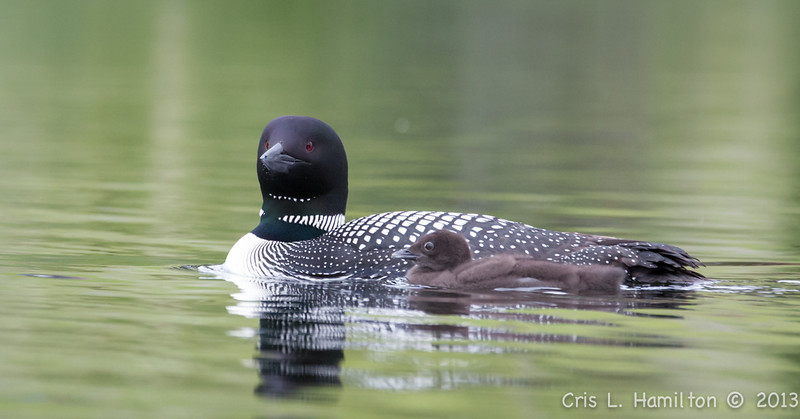 Loons1-5494