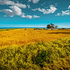 Endless Fields of the Eastern Shore (Prince Edward Island)