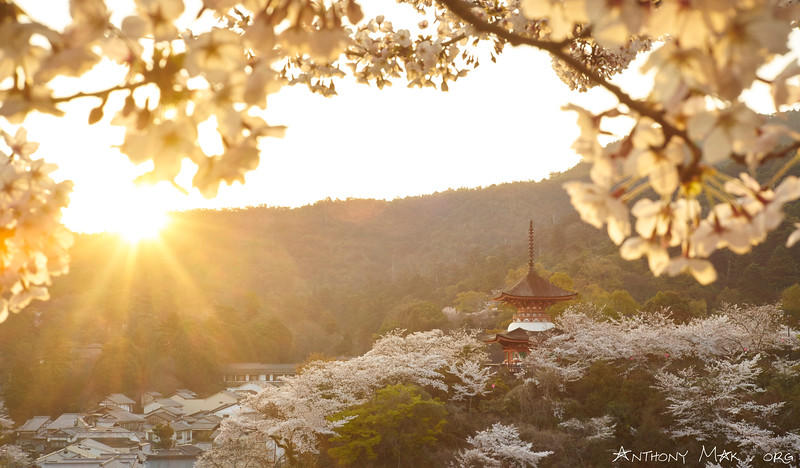 Tahoto Pagoda, Miyajima Island