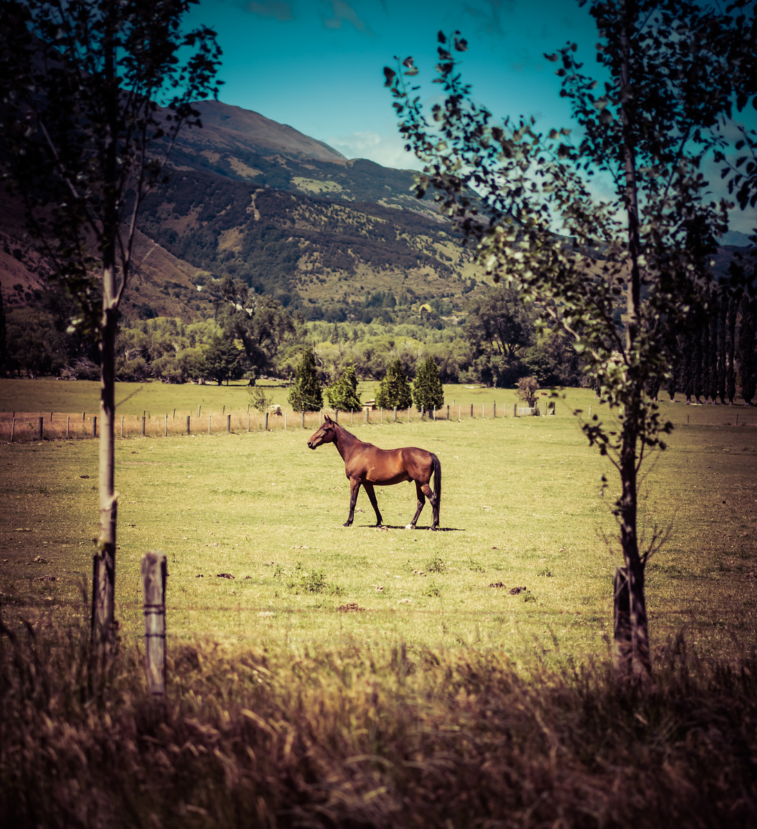 Perfect Horse in Field