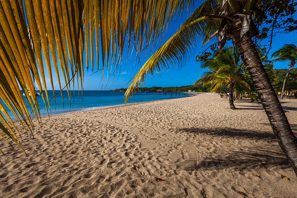 Under the palm tree at Saline beach