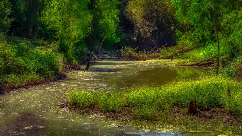 Crane_Swamp