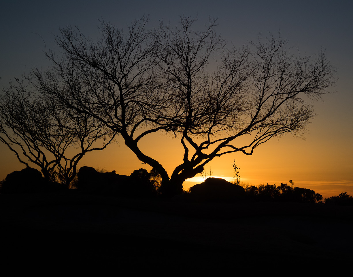 Sunset Tree