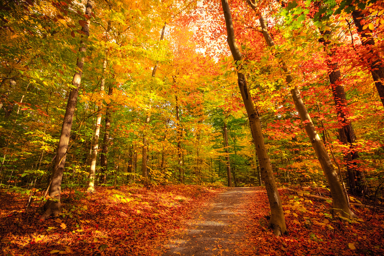 Path to Golden Forest (Montreal)