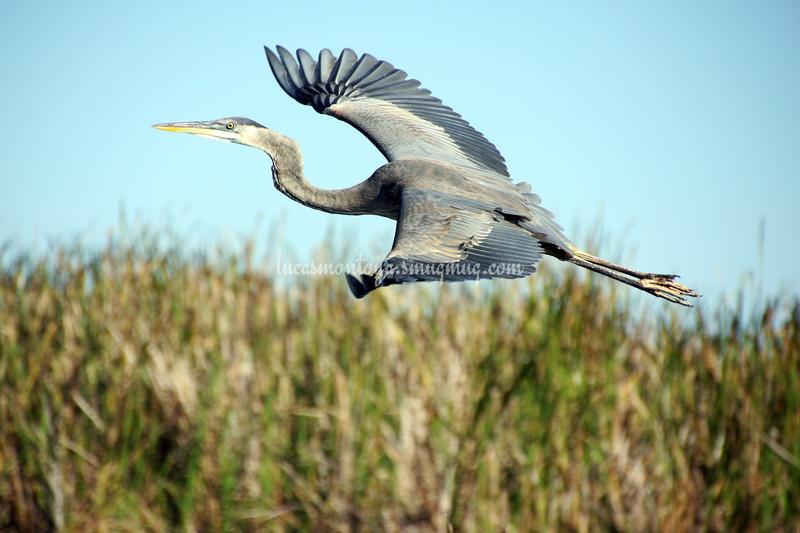 Florida Everglades near Ft. Lauderdale, FL - December 2013