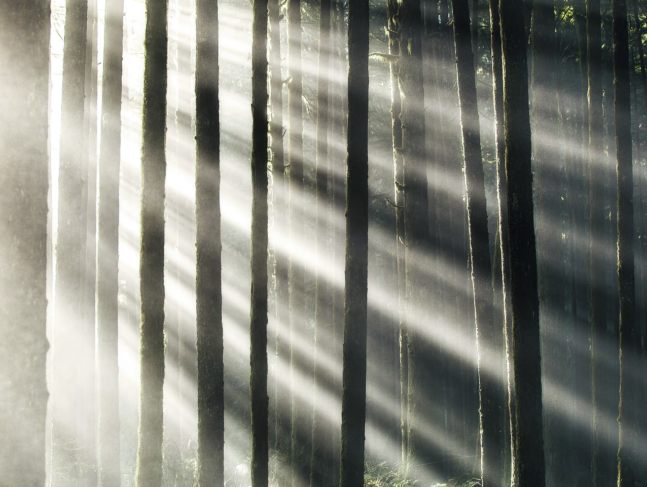 Forest Sunrays in British Columbia