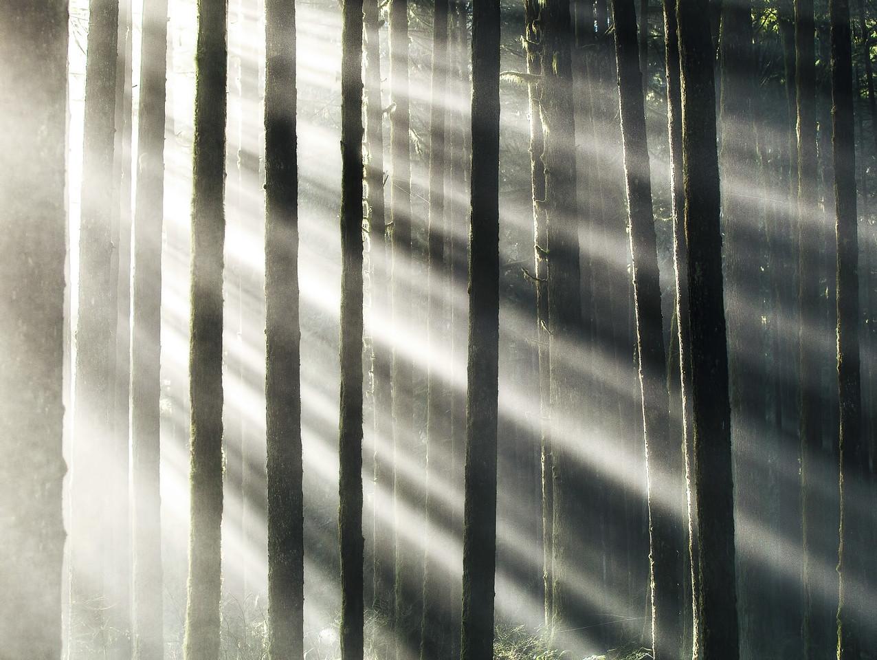 Forest Sunrays in British Columbia