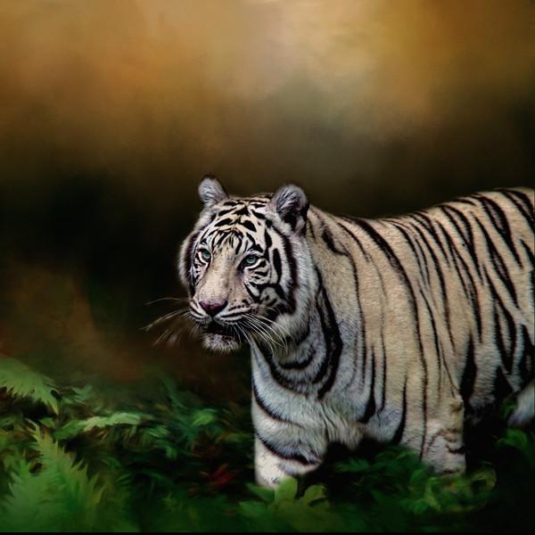White tige