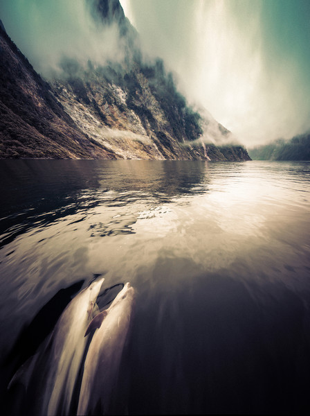 "<h2>Two Dolphins in Love in Milford Sound</h2> <br/>While we took the boat out of Milford towards the Tasman Sea, a pod of bottle-nose dolphins came to visit. They turned and jumped and spiraled in a double helix, twisting endlessly like a playful cyclone.<br/><br/>- Trey Ratcliff<br/><br/><a href=""http://www.stuckincustoms.com/2013/02/19/two-dolphins-in-love-in-milford-sound/"" rel=""nofollow"">Click here to read the rest of this post at the Stuck in Customs blog.</a>"