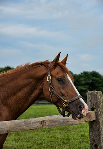 Handsome Horse, Chestertown, Maryland