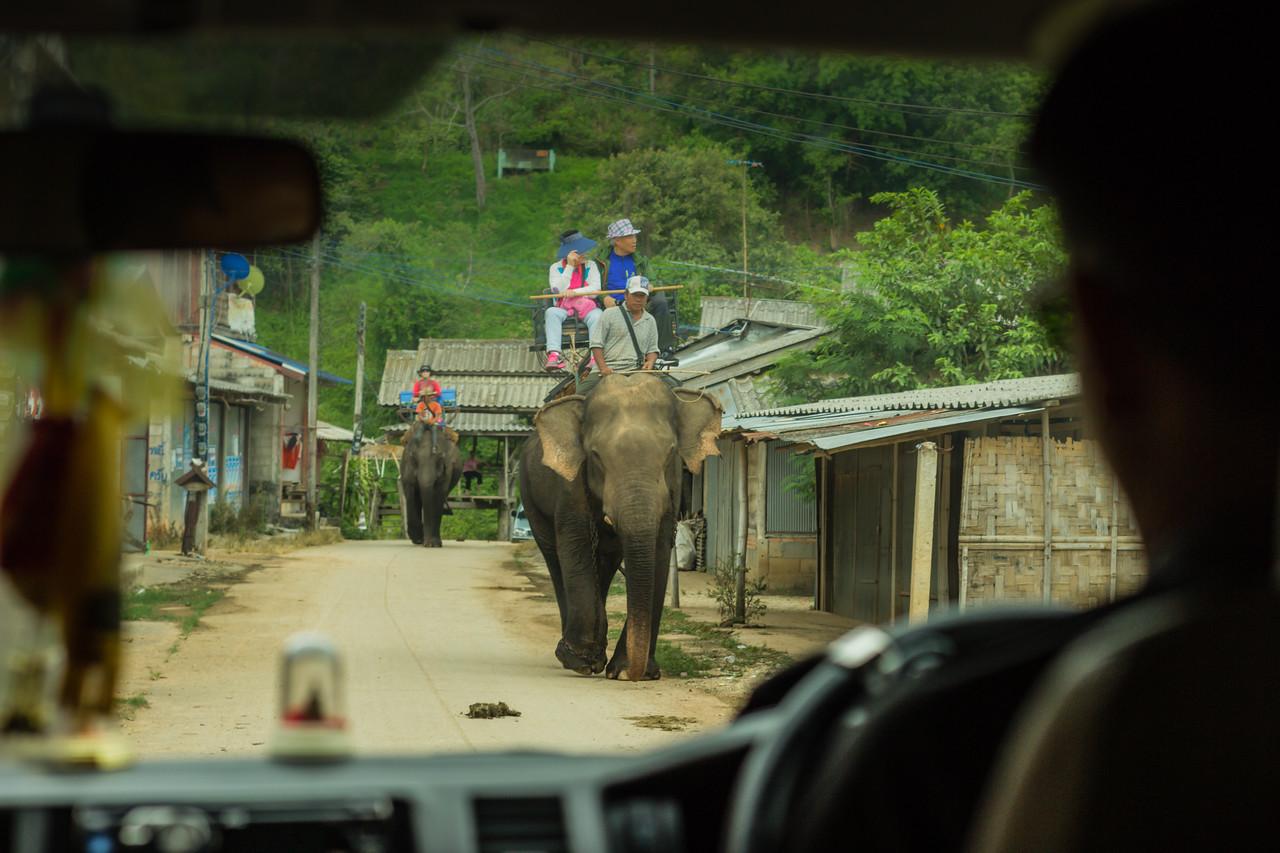 Elephant-Riding-Chiang Rai-Thailand