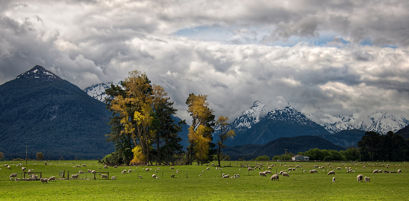 "<h2>Sheep on the way to Paradise</h2> This title makes it sounds a bit like they are about to be slaughtered...  or maybe they are suicide-sheep, about to meet some sweet sweet virgin sheep in paradise.  But no, this is not what I mean.  There is a little town past Glenorchy, New Zealand called ""Paradise"".  I passed these sheep while on the way there.  I never made it to Paradise, truthfully.  I turned around.  It felt like such a long way to get here, and I had to turn around to get back to Queenstown before it got too late.  I took this photo with my new Nikon 28-300 lens.  I love it so far!  This one was shot at f/5.6, 70mm, and ISO 100.  Read more <a href=""http://www.stuckincustoms.com/2010/11/07/sheep-on-the-way-to-paradise/"">here </a>at the Stuck in Customs blog."