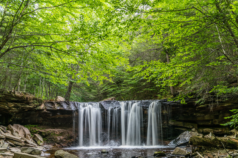 Forest Over Oneida Falls