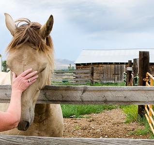 Montanta Horses_1