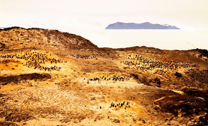 Penguins Forever