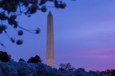 Sunrise Over Cherry Blossoms