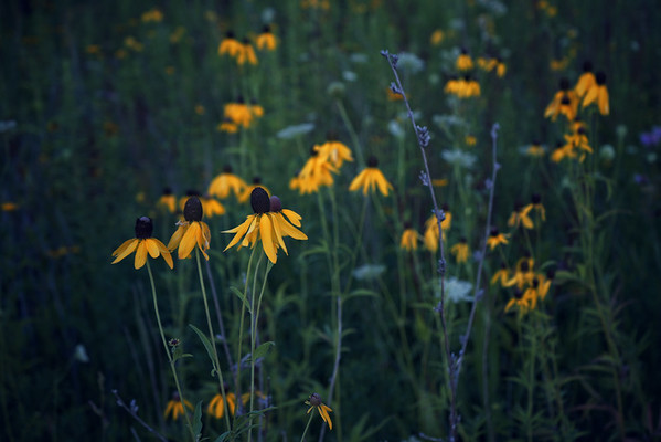 'Scattered Flowers' ~ Rural Missouri