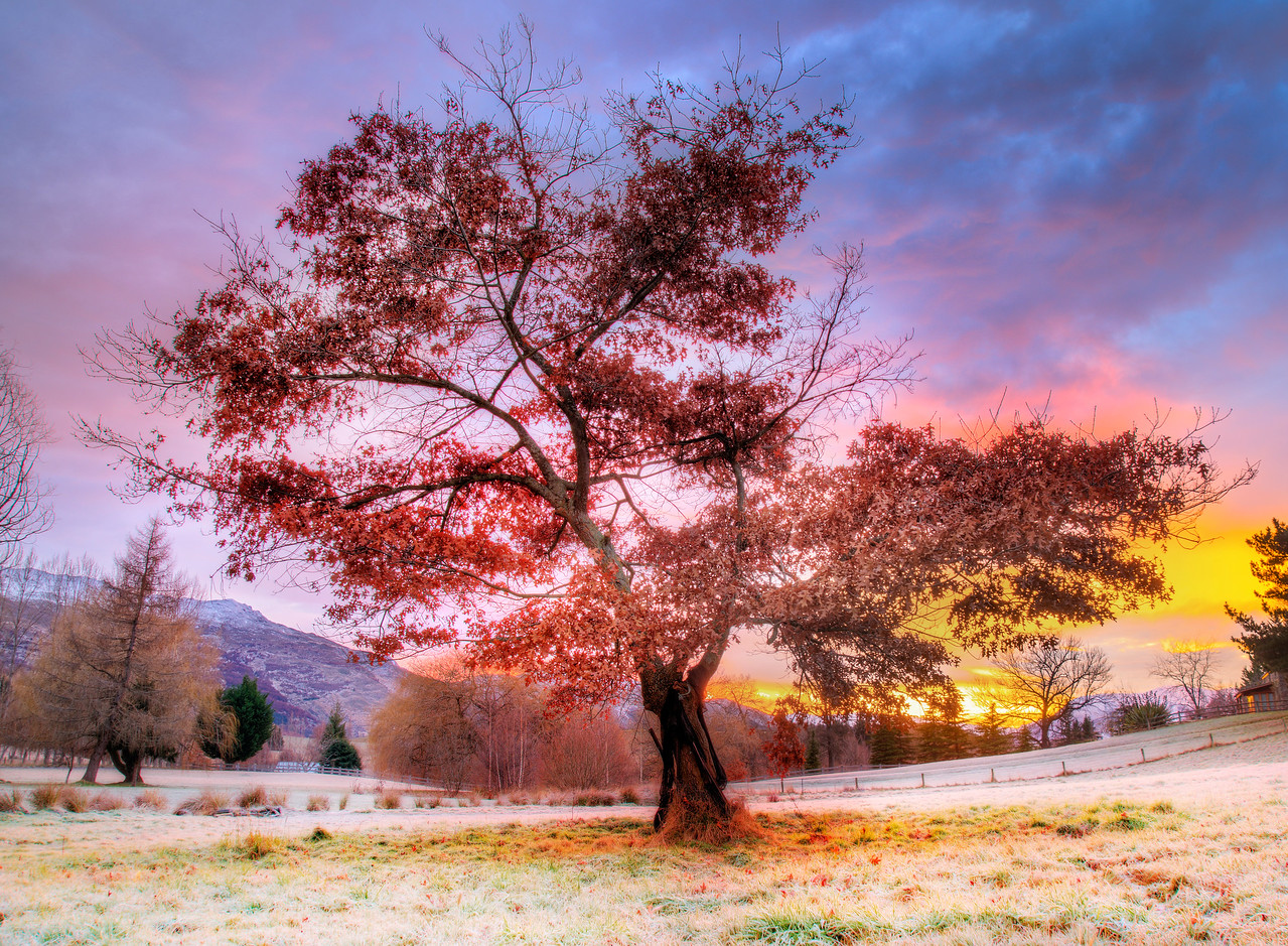 A Colorful Frosty Morning