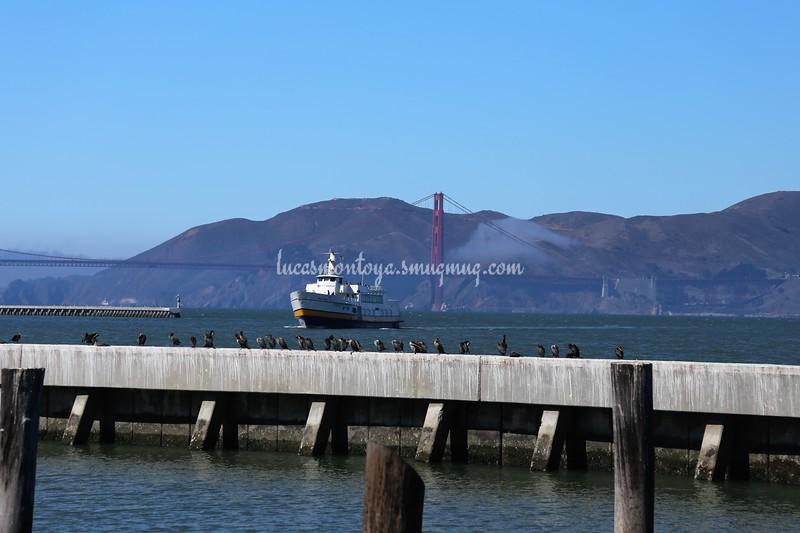 San Francisco Bay and Alcatraz - San Francisco, California