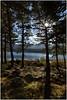 Loch Morlich nr aviemore