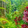 The Jungle on the Big Island of Hawaii