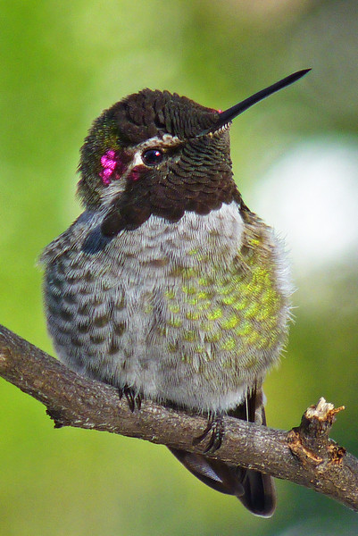 Can hummingbirds smile?