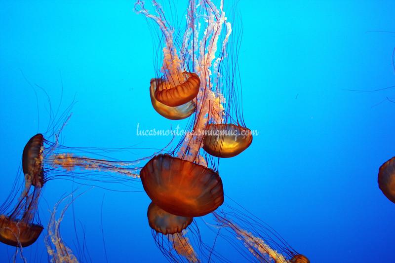 Monterey Bay Aquarium in Monterey, California - October 2011