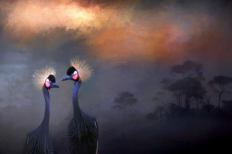 African Crowned crane pair