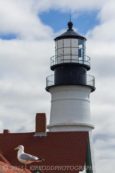 Seagull at Portland Head Light Lighthouse