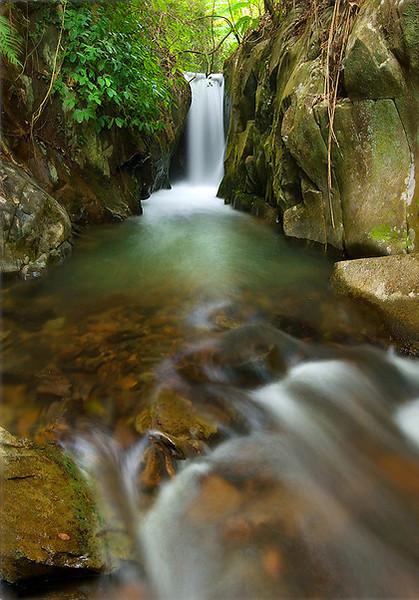 Panlongxia Forest, Guangdong Province