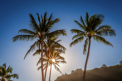 Tropical starlight