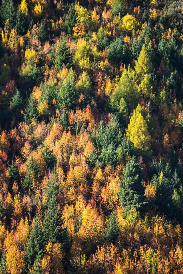 The Autumn Hillside Above Arrowtown